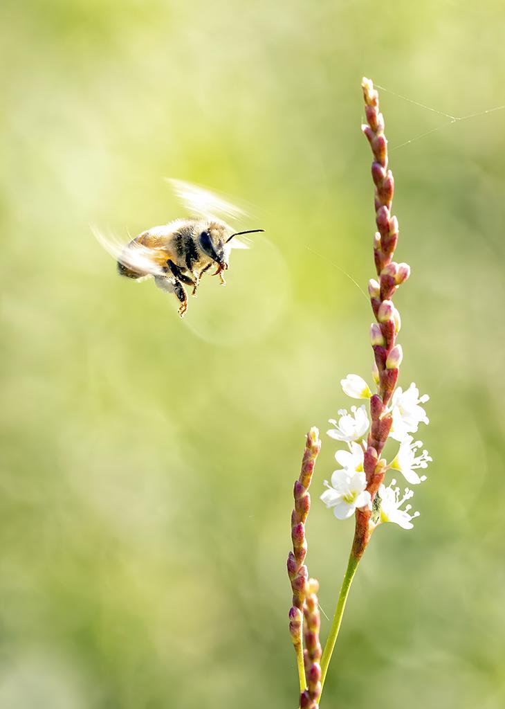 Celebrating Pollinators