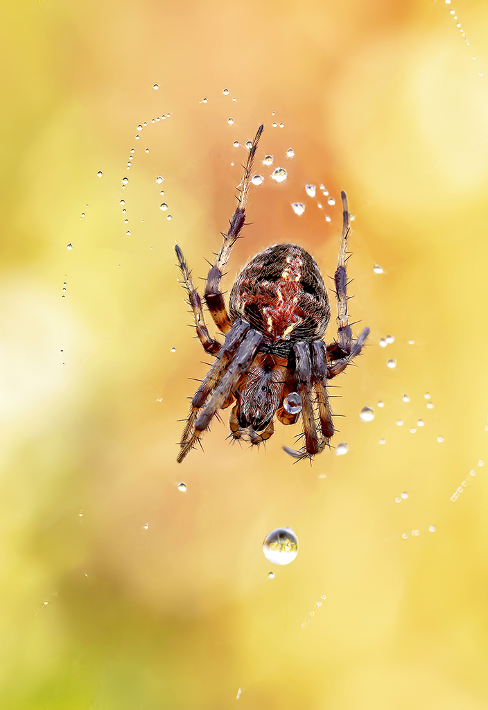 Without the Webbing – A SpiderFantasy