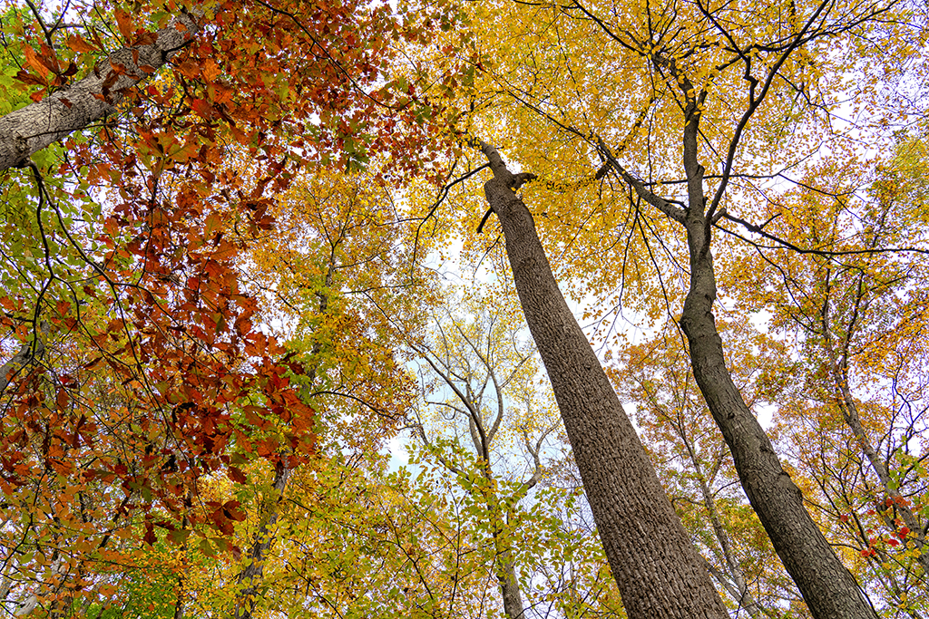 Catoctin in Autumn