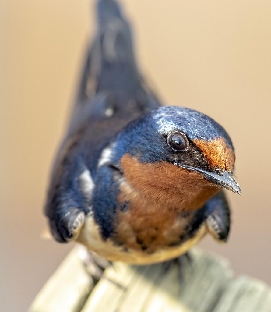 Macro Lens BirdPhotography