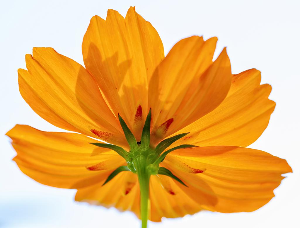 The Beauty OrangeBrings
